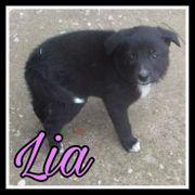 Lia sucht ein