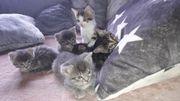 Zuckersüße Bengal-Kitten