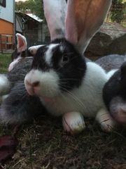 Kaninchen DR-Mix