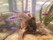 Fische wegen Auquariumauflösung