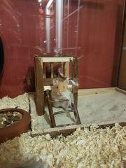 Hamster Mädchen mit allem drum