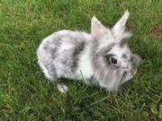 Verschiedene Kaninchen Damen