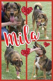 Tolle Mila sucht zuhause