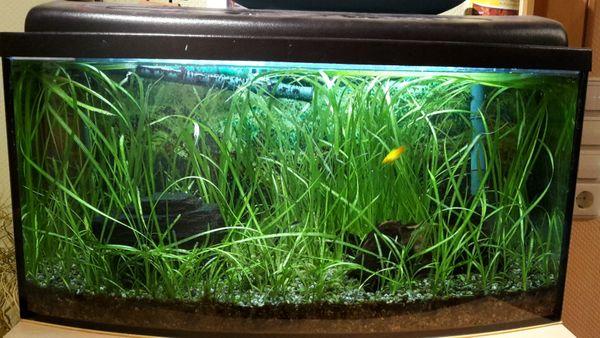 abmessungen kleinanzeigen aquaristik kaufen verkaufen. Black Bedroom Furniture Sets. Home Design Ideas