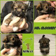 Mr. Clooney - ein