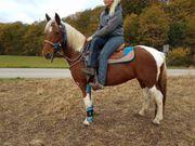 Pferd Kaufen Nürnberg