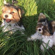 Hundetrainer gesucht Umkreis Böblingen