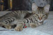 Wunderschöne Babykatzen