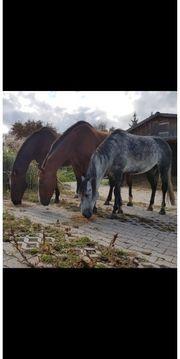 Stallhilfe mit PferdeErfahrung