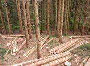 Brennholz-Hackschnitzelholz