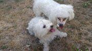 Hundebetreuung Dog Daycare für Zwerghunde