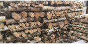 Brennholz Birkenholz Meter Stücke