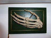 Hand Skelett Modell