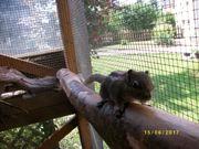 Streifenhörnchen und Baumstreifenhörnchen