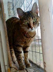 Judy - 4 Jahre Tierschutzschönheit