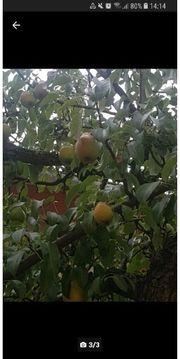 Trauben und Birnen