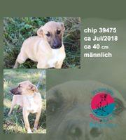 chip 39475- leider noch ohne